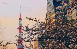 東京の写真・画像素材[3485128]
