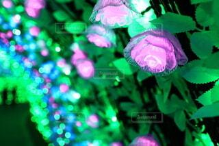 花,アート,イルミネーション,クリスマス,明るい,カラー
