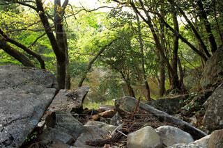 自然,風景,秋,森林,屋外,葉,樹木,岩,ジャングル