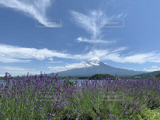 富士山とラベンダーの写真・画像素材[4612990]