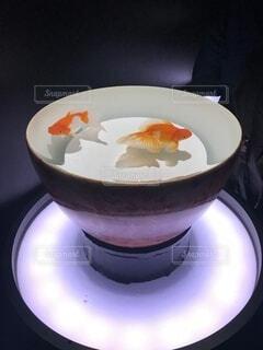 金魚の写真・画像素材[4709733]
