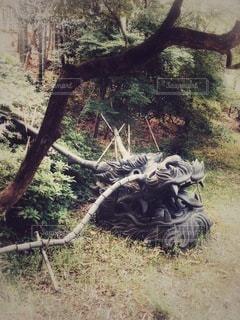 地面に転がる龍頭の写真・画像素材[3519446]