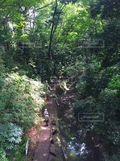 渓谷散策の写真・画像素材[3521645]