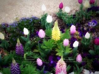 春の花壇の写真・画像素材[3521921]