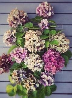 アジサイ切り花の写真・画像素材[3521993]