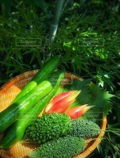 夏野菜の写真・画像素材[3688293]