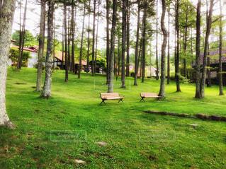 森の中のリゾートの写真・画像素材[4264018]