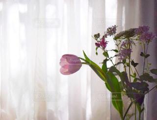 レースのカーテンに差し込む春の朝日を浴びる花瓶の花①の写真・画像素材[4312298]