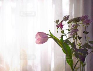 レースのカーテンに差し込む春の朝日を浴びる花瓶の花②の写真・画像素材[4312299]