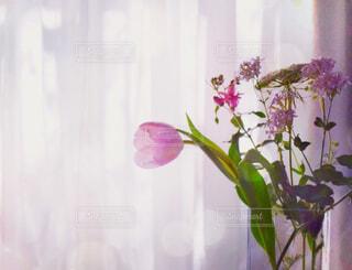 レースのカーテンに差し込む春の朝日を浴びる花瓶の花③の写真・画像素材[4312975]
