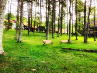 森の中のリゾート*ベンチに座り森林浴の写真・画像素材[4412080]