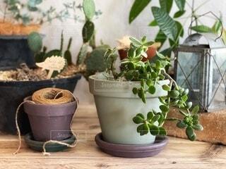 室内育ちの観葉植物と多肉植物たちの写真・画像素材[4944007]