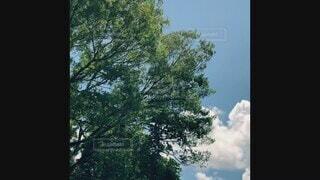 空,夏,屋外,雲,青空,入道雲,暑い,日差し,爽やか,樹木,ブルー,夏休み,summer,サマー,真夏,エンジョイ,動画,夏日,浮かぶ,もくもく,夏が来た,そよ風,モクモク,軽快,シンプル素材,音楽付き