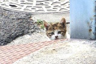ひょっこり顔を出した仔猫の写真・画像素材[3522284]
