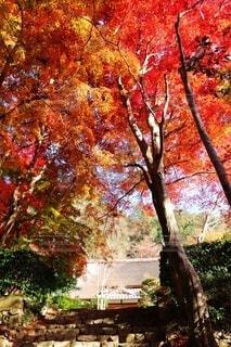 秋の紅葉の写真・画像素材[4008581]