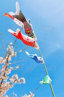 鯉のぼりの写真・画像素材[4386671]