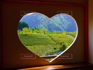 茶畑の写真・画像素材[4408201]