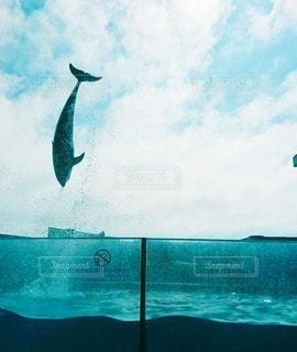 イルカの写真・画像素材[3514141]