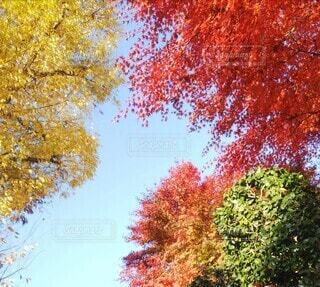 木のクローズアップの写真・画像素材[3720825]