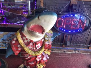 サメのお出迎えの写真・画像素材[3510247]