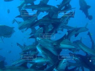 サメの写真・画像素材[3499295]