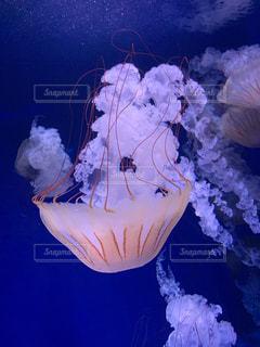 逆さまのクラゲの写真・画像素材[3513100]