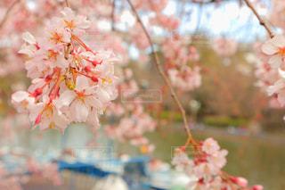 春 - No.412124