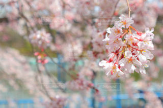 春 - No.412126