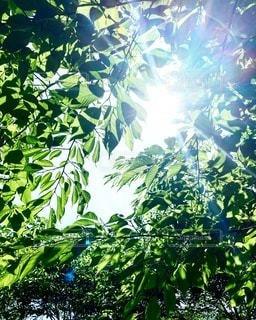 5月の空と新緑の写真・画像素材[3528771]