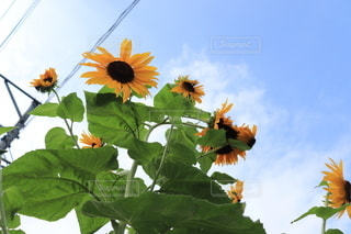 花のクローズアップの写真・画像素材[3513016]