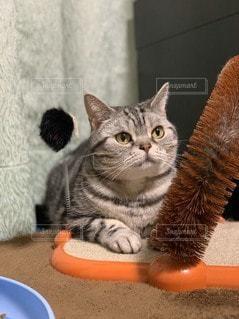 座っている猫の写真・画像素材[3516562]