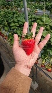 果物を持つ手の写真・画像素材[3527856]