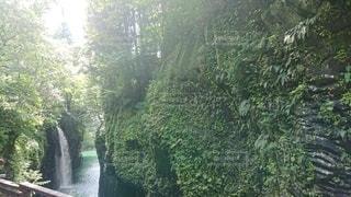 森の中の滝の写真・画像素材[3527863]