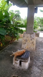 夏バテ猫の写真・画像素材[3527870]