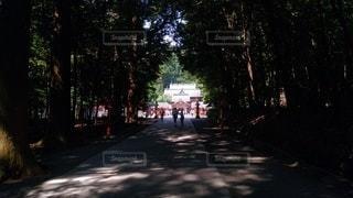 通り道の写真・画像素材[3527877]