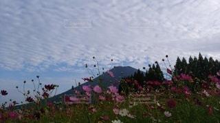 山と花の写真・画像素材[3527881]