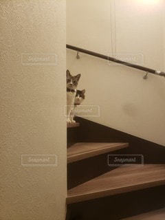 覗く猫の写真・画像素材[3527887]