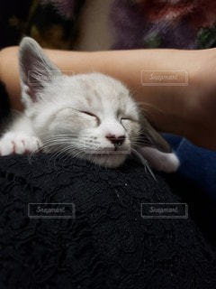 猫を抱いている人の写真・画像素材[3527893]