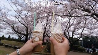 食べ物,空,公園,桜,屋外,手持ち,デザート,樹木,人物,人,アイスクリーム,ポートレート,ライフスタイル,草木,手元
