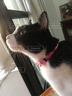 窓の前に座っている猫の写真・画像素材[3528935]