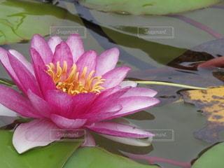 花のクローズアップの写真・画像素材[3536237]