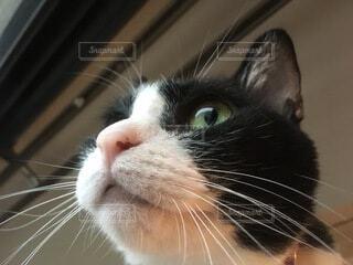猫のクローズアップの写真・画像素材[3629912]