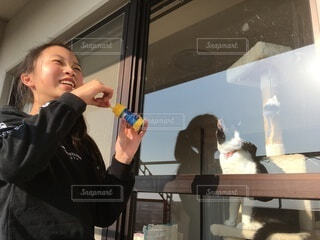 シャボン玉をする女の子と、眺める猫の写真・画像素材[4183931]
