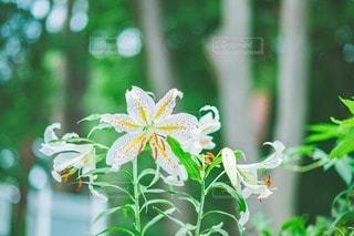 花のクローズアップの写真・画像素材[3513672]