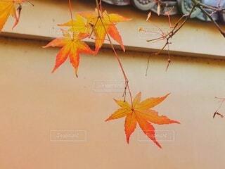 道中の紅葉の写真・画像素材[3722586]