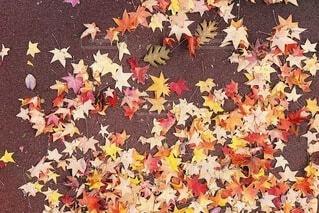 散る紅葉の写真・画像素材[3715341]