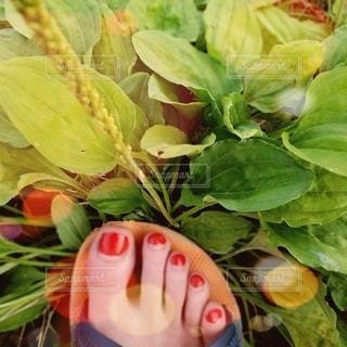 緑の夏の写真・画像素材[3528596]