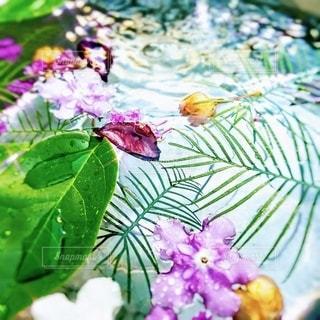 お花。の写真・画像素材[3583423]