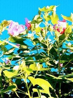 お花。の写真・画像素材[3624830]
