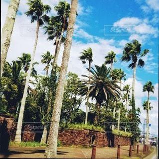 ヤシの木のある街。の写真・画像素材[3635768]